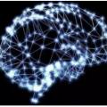 知识神经元网络